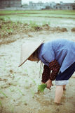 Chinese peasant Stock Image