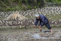 Chinese peasant works the soil in rice fields using mattock. Royalty Free Stock Images