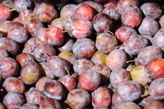 Chinese Plums. Pile of small chinese plums Stock Image