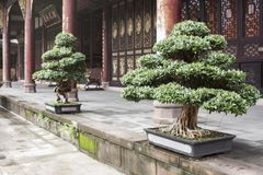 Chinese Pot Plants in Front of Building. royalty free stock photos
