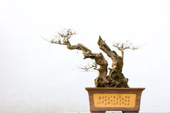 Chinese potted landscape Stock Photo