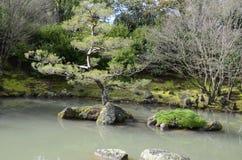 Chinese Pruned Tree. In Lake Royalty Free Stock Image