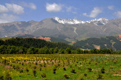 Chinese Qinghai plateau scenery. This is China Qinghai plateau scenery, snow capped mountains, beautiful scenery of the grassland Royalty Free Stock Photos