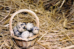 Basket of Quail Eggs Stock Images