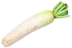 Chinese radish Royalty Free Stock Photos