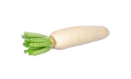 Chinese radish isolated on white Stock Images