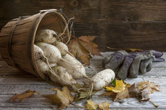 Chinese radishes in a basket. A close up concept image of chinese radishes in a basket Stock Photography
