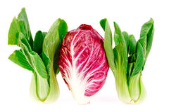 Chinese and red cabbages in isolated on white background Stock Photography
