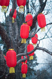Chinese red lantern decoration Stock Image