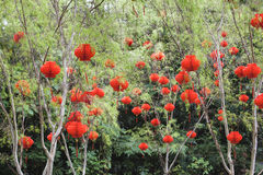 Chinese Red Lanterns Hanging on Trees Stock Photos