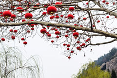 Chinese red lanterns of tree branches in spring Stock Image