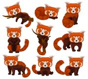 Chinese red panda set, cute fluffy wild animals in different poses vector Illustration on a white background stock illustration