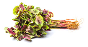 Chinese Red Spinach II Royalty Free Stock Photography