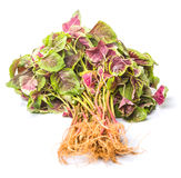 Chinese Red Spinach III Royalty Free Stock Image