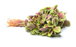 Chinese Red Spinach IV Royalty Free Stock Images