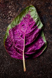 Chinese Red Spinach Leaf. Top down shot of Single Chinese Red Spinach Leaf against Dark Background stock images