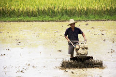 Chinese Rice Farming Stock Image