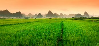 Chinese rice field sunset with karst formations Stock Images