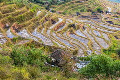 Chinese rice fields in cloudy weather Royalty Free Stock Photography