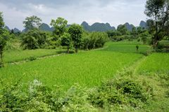 Chinese rice fields, Yangshuo, China Royalty Free Stock Images