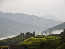 Chinese rice terrace Royalty Free Stock Photography