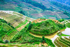 Chinese Rice Terraces Royalty Free Stock Image