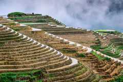 Chinese Rice Terraces Stock Photography
