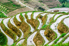 Chinese Rice Terraces Stock Images