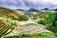 Chinese Rice Terraces Royalty Free Stock Photography