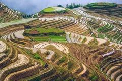 Chinese Rijstterrassen stock afbeelding