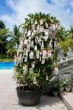 Chinese ritual tree Stock Photo