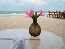 Chinese roses on the beach. The vase of flowers on sunny sand beach Stock Image