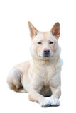 Chinese Rural Dog Stock Photos