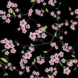Chinese sakura black seamless vector pattern Royalty Free Stock Photo
