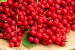 Chinese schizandra - red ripe berries Stock Photography