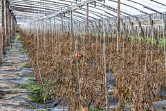 Chinese serres in de herfst na oogst stock afbeeldingen