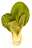 Chinese Shanghai Green Cabbages Stock Photography