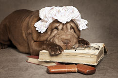 Chinese sharpei dog Royalty Free Stock Photo