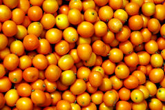 Chinese small cumquat stock photo