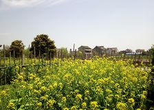 Chinese south village flowers field royalty free stock image