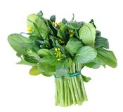 Chinese spinach Stock Image
