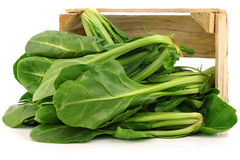 Chinese spinach (Ipomoea aquatica). In a wooden crate on a white background stock photos