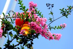 Chinese spring festival the flowers outdoor royalty free stock photo