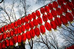 Chinese spring festival lantern glim scaldfish. During the Spring Festival, the Han and some ethnic minorities in China held various celebrations. These Royalty Free Stock Photos