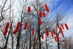 Chinese Spring Festival Lantern on tree stock photo