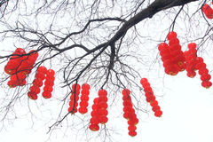 Chinese Spring Festival Stock Photography