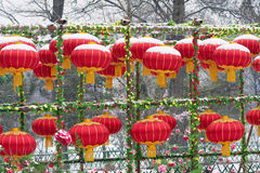 Chinese Spring Festival Royalty Free Stock Image