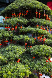 Chinese Spring Festival. Tree and Chinese lanterns Stock Image