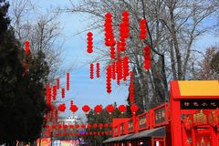 Free Chinese Spring Festival With Lantern On Tree Royalty Free Stock Image - 139340646