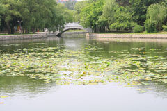 Chinese stone arch bridge. In park Royalty Free Stock Photography